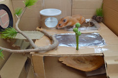 Terrain de jeu de hamster de boîte en carton Images libres de droits