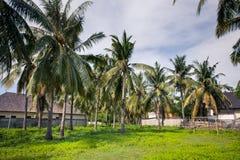 Terrain de jeu - terrain de football parmi des palmiers dans les tropiques Image stock