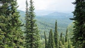 Terrain de montagne avec des arbres avec la taille Photographie stock libre de droits