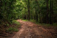 Terrain de route de saleté et de boue dans la forêt après jour pluvieux photo stock