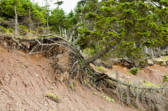 Terrain Landslide. On Sedimentary Ground Stock Photography