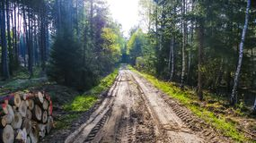 Terrain road in forest Stock Photos
