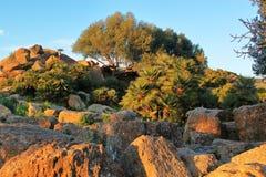 Terrain rocheux montagneux avec la végétation locale typique dans les rayons du coucher de soleil Voyage vers l'Italie extérieur image libre de droits