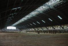 Terrakottakrigare och hästar Fotografering för Bildbyråer