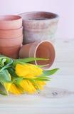 Terrakottakrukar och gula tulpan. Arkivbilder