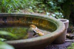 Terrakottaschüssel mit Wasser Stockfotografie