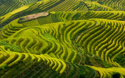 Terrance en China Fotografía de archivo
