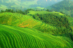 Terraço verde do arroz em mountaines da porcelana Imagens de Stock Royalty Free