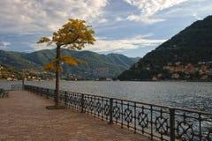 Terraplén de Como del lago con un árbol decorativo imagen de archivo