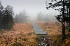 Terraplén de la madera en bosque brumoso oscuro Fotografía de archivo libre de regalías