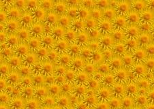 Terraplén del amarillo de las flores grande Fotografía de archivo libre de regalías