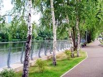 Terraplén del río con los árboles hermosos imagen de archivo libre de regalías