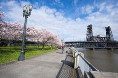 Terraplén Portland de la primavera con los árboles florecientes y el brid del ciclista Foto de archivo