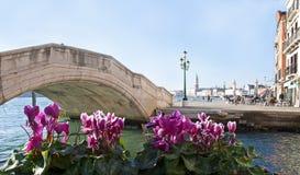 Terraplén veneciano con la flor imagen de archivo