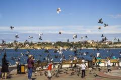 Terraplenagem em Sevastopol imagem de stock royalty free