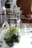 Terrario de cristal geométrico del helecho Fotos de archivo