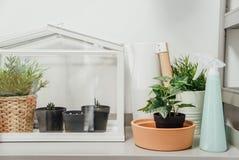 Terrario miniatura de la casa verde Imagenes de archivo