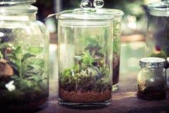 Terrarium στο βάζο γυαλιού στοκ εικόνες