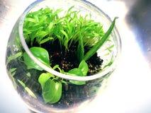 terrarium Images stock