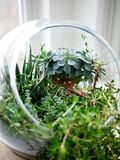 Terrarium Royalty Free Stock Image