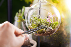 A terrarium bottle Royalty Free Stock Image