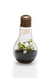Terrarium in bulb shape. Royalty Free Stock Images