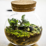 Terrarium closed loop of respiration, house planting decoration. Terrarium plant is one of the best hobby for plant lover. It can be put in everywhere even you Royalty Free Stock Photo