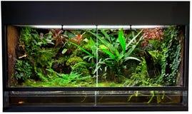 Terrarium de forêt tropicale photo libre de droits