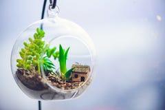 Terrarium em uma janela do escritório imagem de stock royalty free