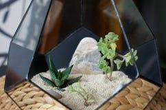 Terrarium florarium зеркала суккулентный Стоковое Фото