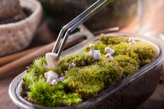 A terrarium garden. Scene in a bowl decorated with duck family minature toy using stainless forceps Royalty Free Stock Images