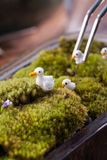 A terrarium garden. Scene in a bowl decorated with duck family minature toy using stainless forceps Royalty Free Stock Photos