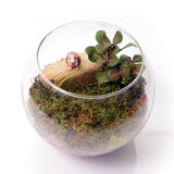 Terrarium in glass bottle. Royalty Free Stock Images
