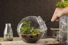 Terrarium Stock Photo