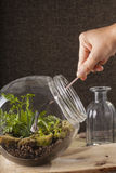 Terrarium Stock Photos