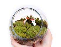 Terrarium in hands. Terrarium, small garden, in hands on white background Stock Photos