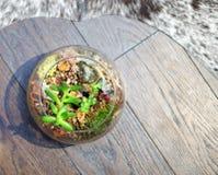 Terrarium on hardwood floor with cowhide rug Stock Photography