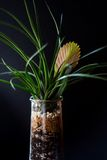 Terrarium made in a jar with bromeliad plants Royalty Free Stock Photos