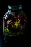 Terrarium made in a jar with carnivore plants Stock Image