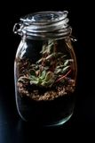 Terrarium made in a jar with succulent plants Royalty Free Stock Image
