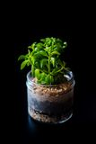 Terrarium made in a jar with succulent plants Royalty Free Stock Images