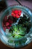 Terrarium made in a jar with succulent plants Stock Photography