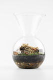 Terrarium plant mini garden. In bottle Stock Image