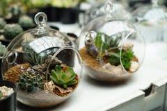 Terrarium plants Stock Photography