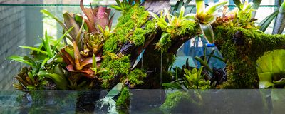 Free Terrarium Style Small Garden With Rock And Driftwood Royalty Free Stock Photos - 149312098