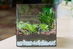 Terrarium with succulent plants royalty free stock photography