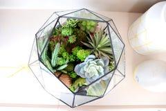 Terrarium. Garden glass for home decoration Royalty Free Stock Photos