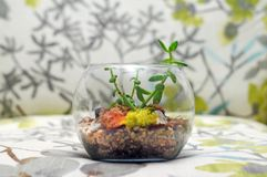 Terrarium on trendy flower and leaf pattern chair Royalty Free Stock Images