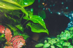 Terrarium Tropical forest Green leaves close up raindrop blued r Royalty Free Stock Photography
