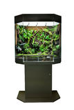 Terrarium for tropical rainforest pets. Terrarium or vivarium for keeping rainforest animal such as poison frog and lizards. Glass habitat pet tank with green Stock Images